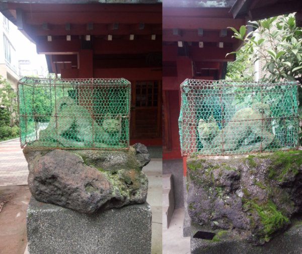 Caged foxes