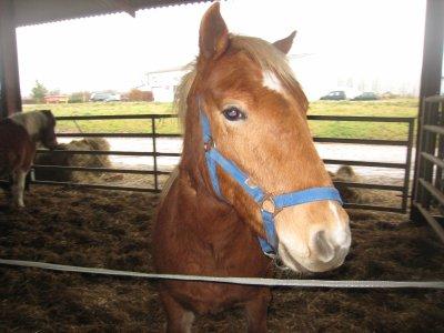 Apache mon poney ♥