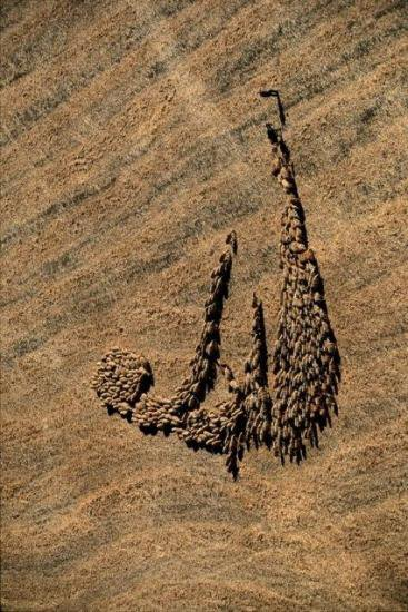 Celui qui croit qu'Allah se trouve partout ?!