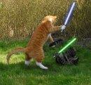 Photo de y-son-fou-c-est-chats