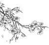 Le Cerisiers