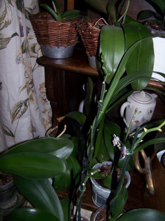 Les Orchidées.....une autre passion!