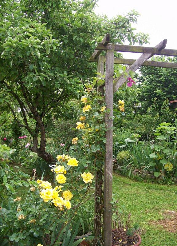 Pour le W.end....une promenade dans le jardin...