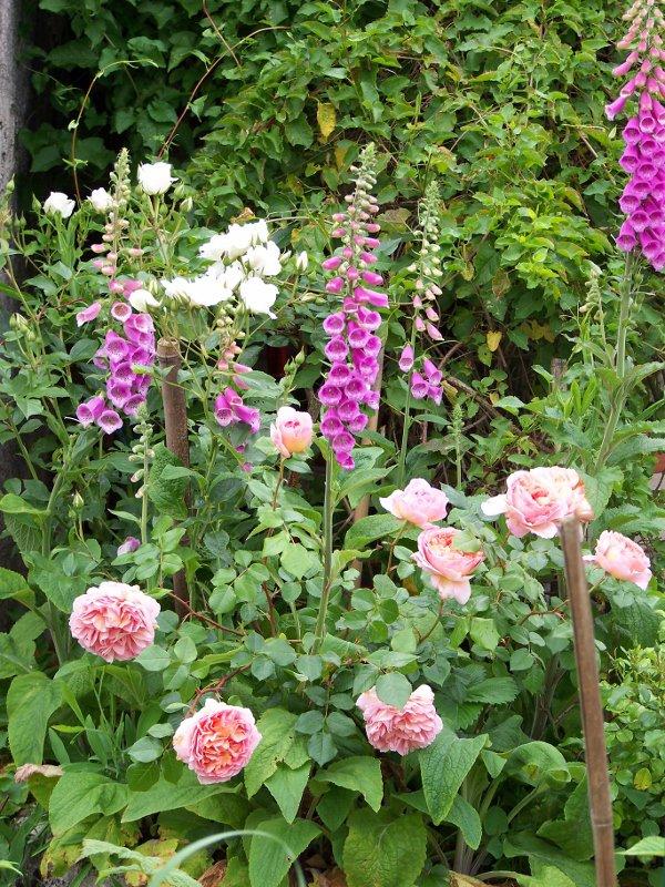 Pour le W.end....une promenade dans le jardin...suite