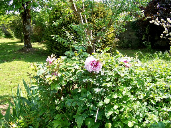 Un petit tour de jardin suite