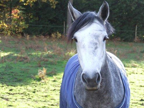 """ Regarde un cavalier sans son cheval , il lui manque la moitié de son sang """