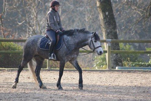 """""""Un cheval a besoin de ses jambes pour courir,de poumons pour respirer , mais d'un coeur pour gagner . """""""