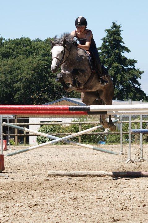Les chevaux sont pour l'homme ce que les ailes sont pour l'oiseau