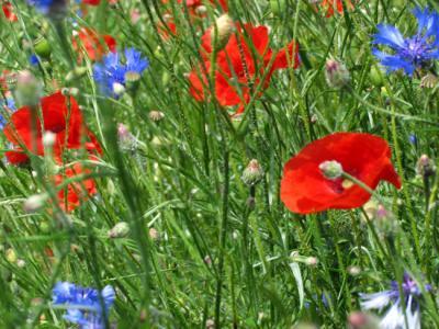 Le Plus Beau Bouquet De Fleur Du Monde Reyv Pete Le Feu