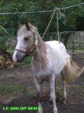 Photo de love-horse45290