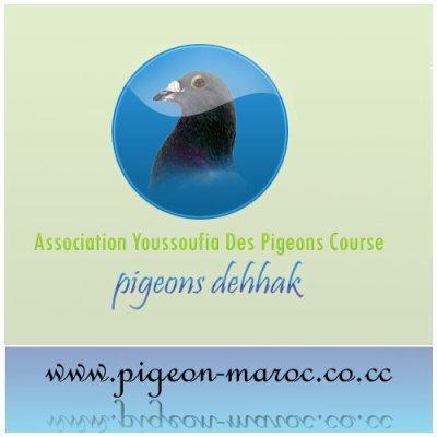 pigeons_youssoufia@hotmail.fr