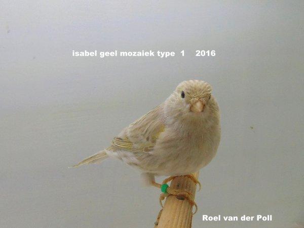 Isabel geel mozaiek 2016    type  1