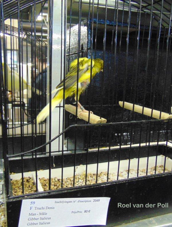 Verkoop vogels te Roeselare 2016.