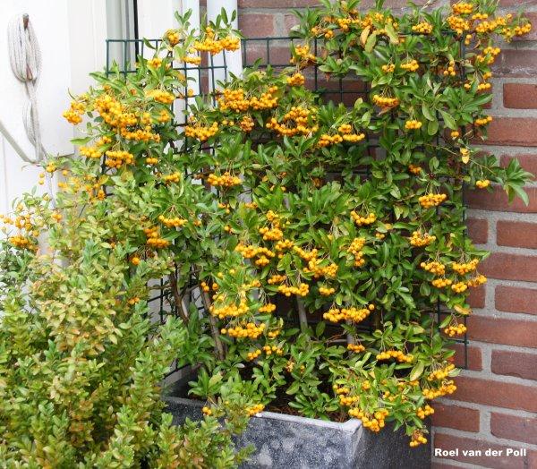 snoep tuintje voor de goudvinken .