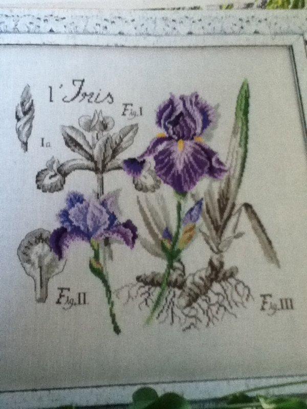 grille  N° 17 l'iris