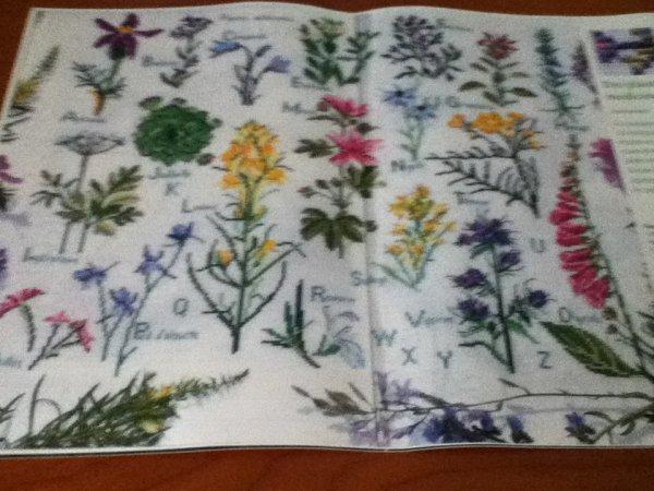 grille  N°65 des plante medicinales