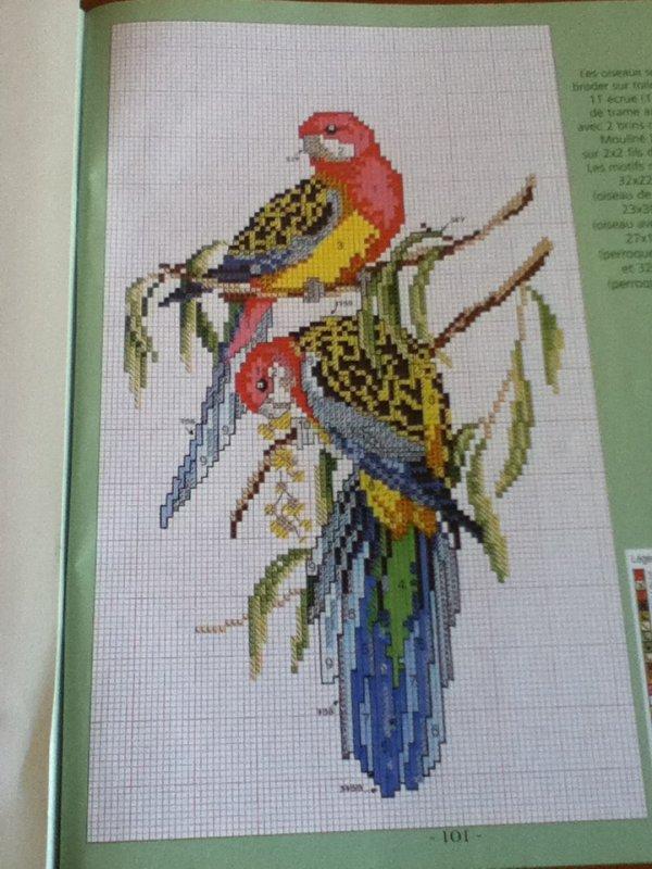 grille  N°115  perroquet  N°4