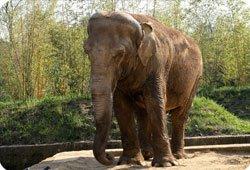 Eléphants menacés d'euthanasie : la Fondation dénonce un scandale