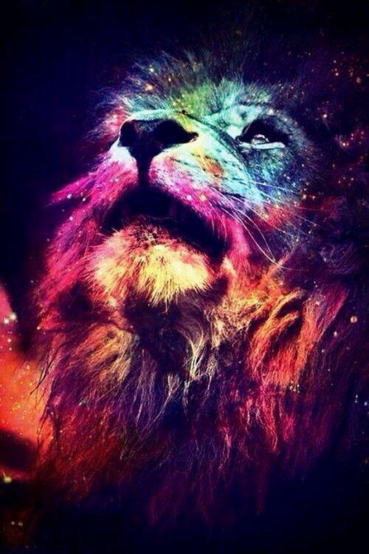 L'image du jour #10 Lion infinity ♥