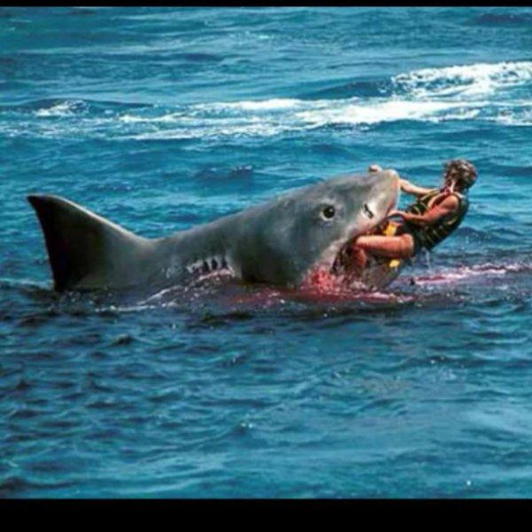 le danger du surf en mer ....