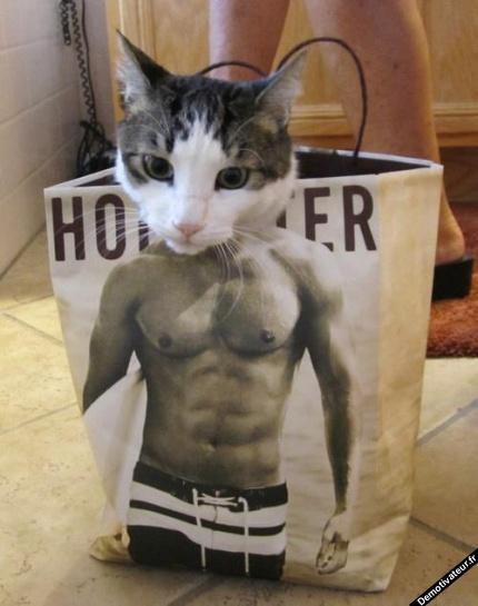 Pour vous les Chats!
