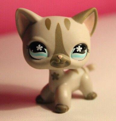 Les plus beau chat européen. partie 1♥//.//♥