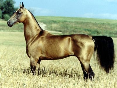 Liste de race de chevaux