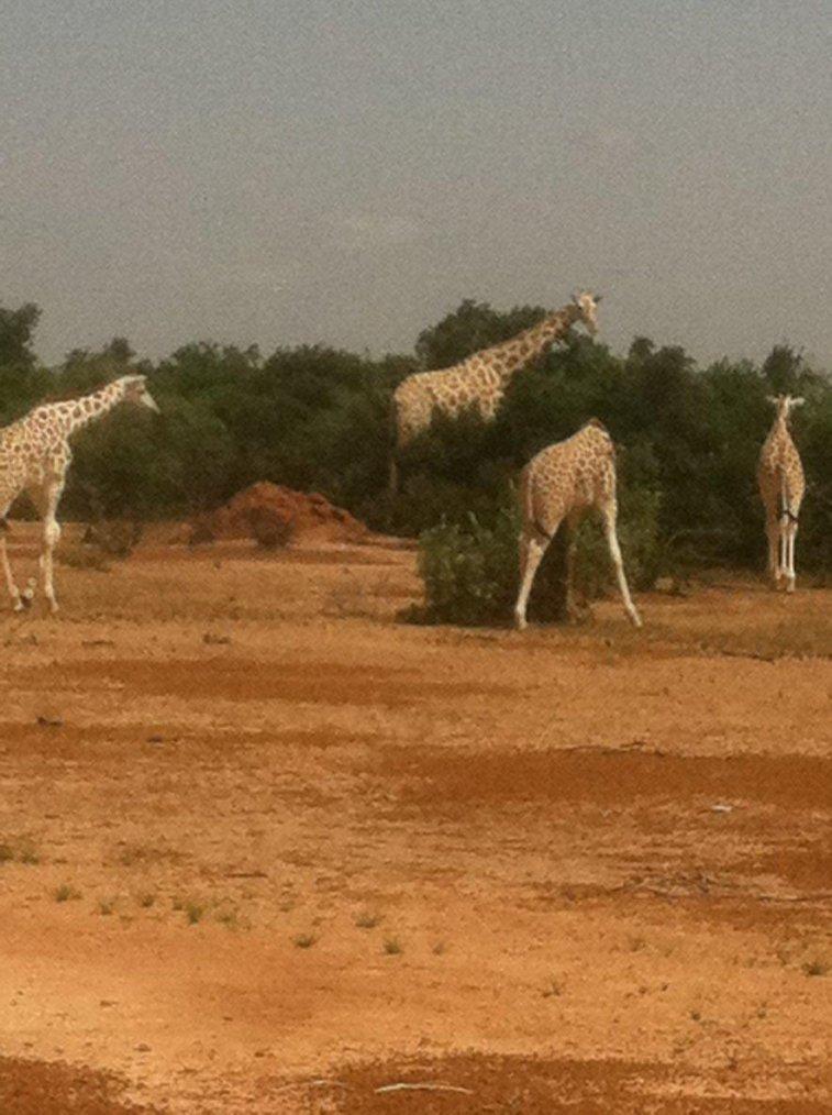 visite du parc aux girafes