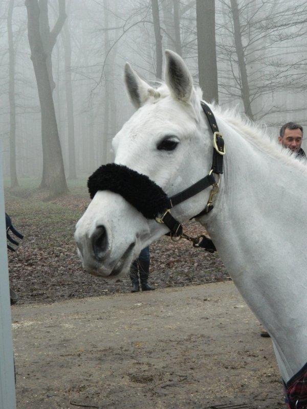 Mon poney c'est une bombe