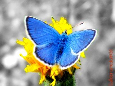 Le papillon ♥