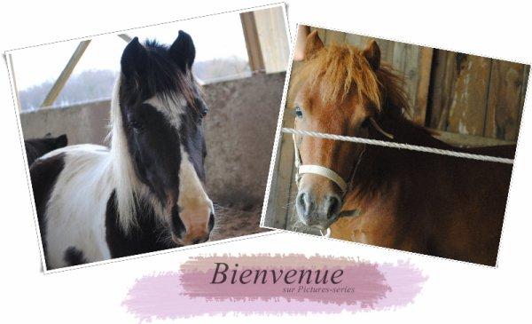 Bienvenue sur le blog des petits poneys dont je suis tombée amoureuse, Scrapi & Pépito. ♥