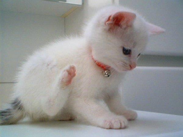 Mon petit chat Farine.