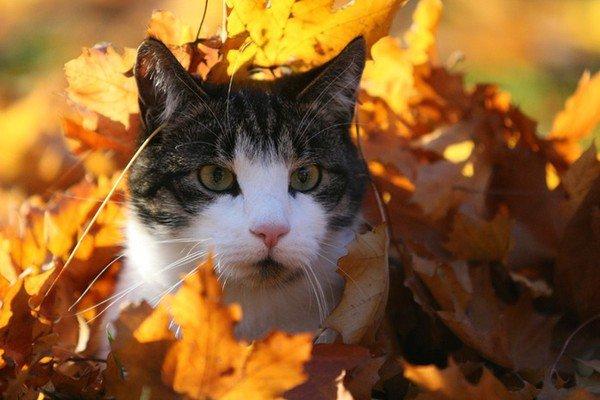 A la découverte de l'automne.