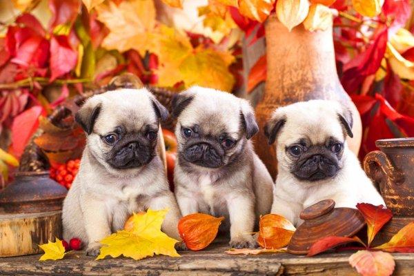 C'est l'automne pour les toutous mignons.