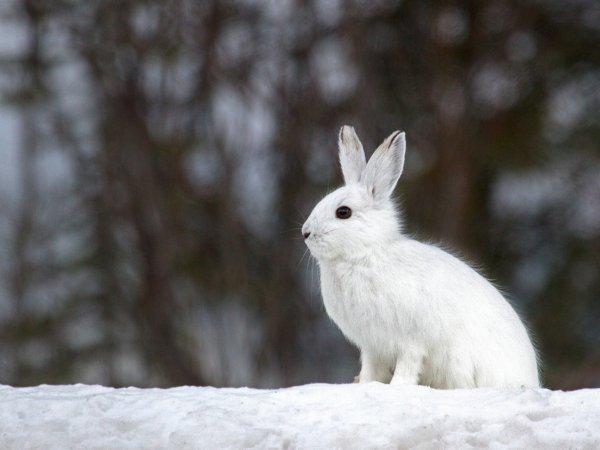 Les petit animaux de la forêt en hiver.