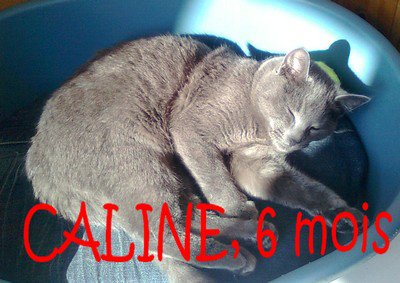 Caline, 6 mois......................