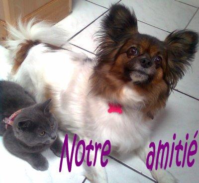 l'amitié est un vain mot.......................