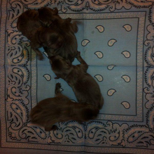 Les 4 mâles!!!