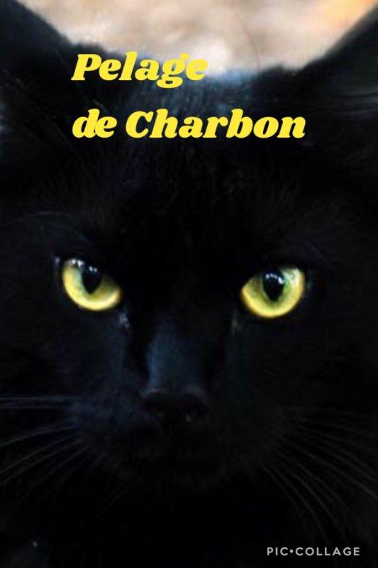 Pelage de Charbon