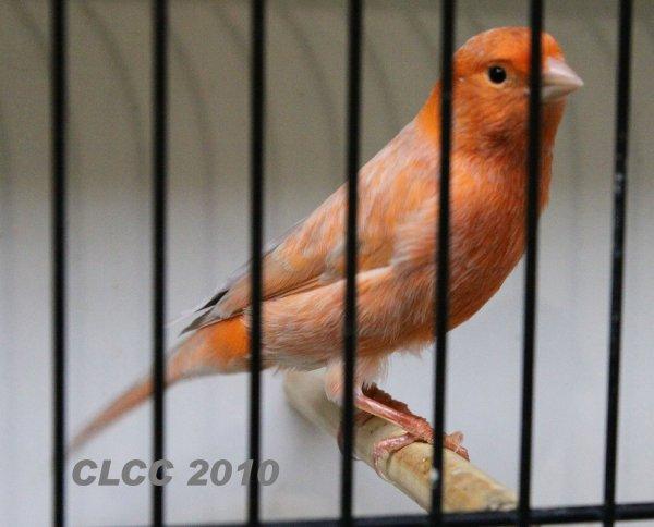 Les champions CLCC 2010 !