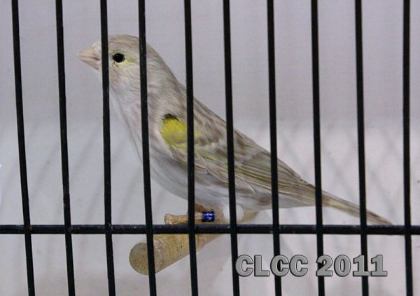 Les champions CLCC 2011