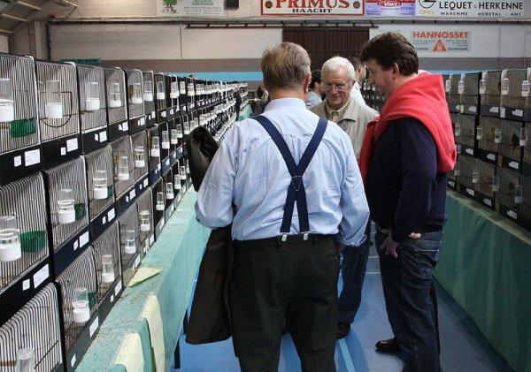 Les premières photos de l'expo 2012...