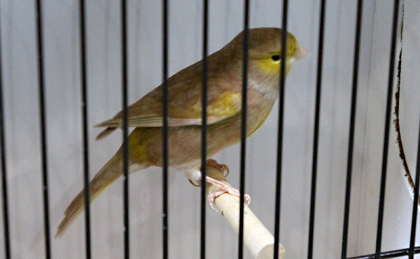 Brun pastel mosaïque jaune type 2
