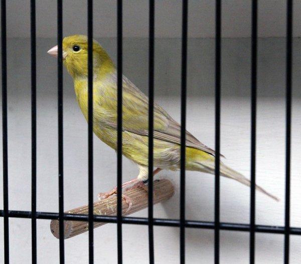 Brun pastel jaune schimmel