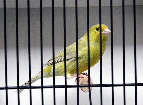 Agate pastel jaune schimmel