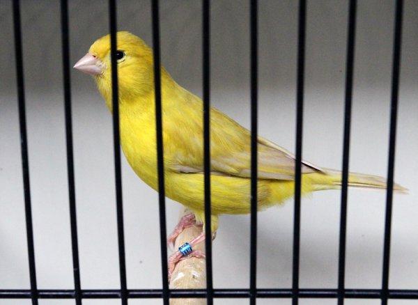 Isabelle pastel jaune intensif