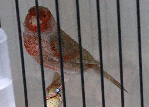 Brun pastel rouge mosaïque type 2