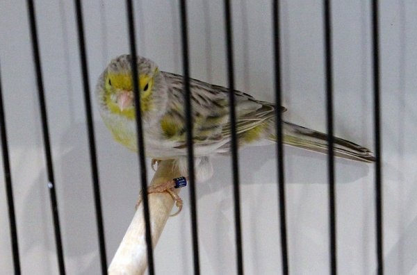 Agate pastel jaune mosaïque type 2