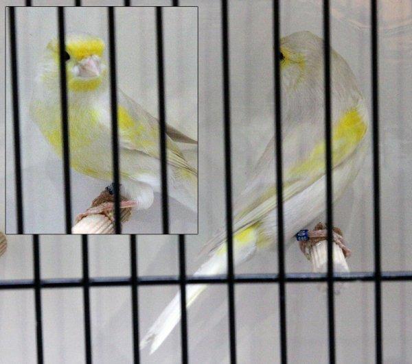 Isabelle pastel jaune mosaïque type 2