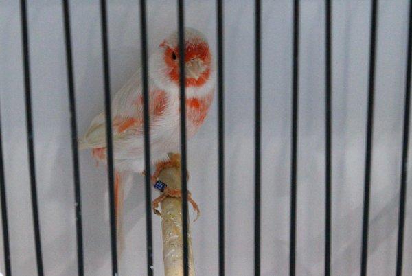 Isabelle pastel rouge mosaïque type 2